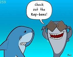 ray-ban-shark-image